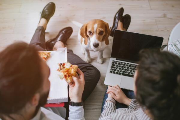 10 aliments que les chiens peuvent manger