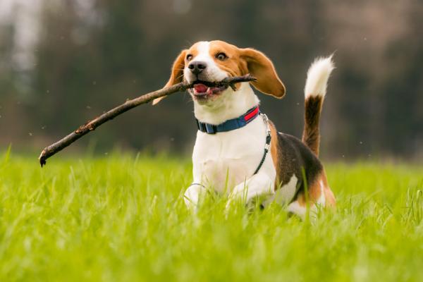 10 caractéristiques des chiens