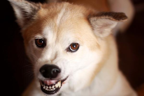 10 choses que les chiens détestent les humains