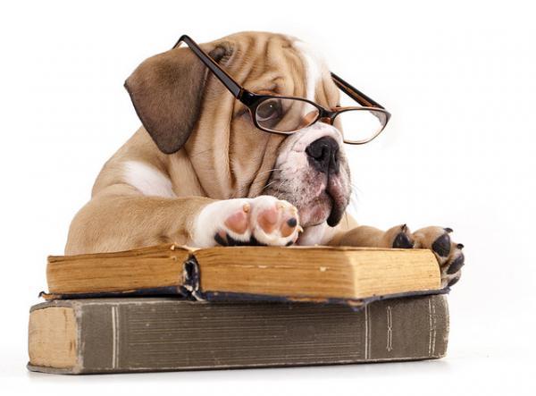 10 mythes sur les chiens que vous devriez connaître
