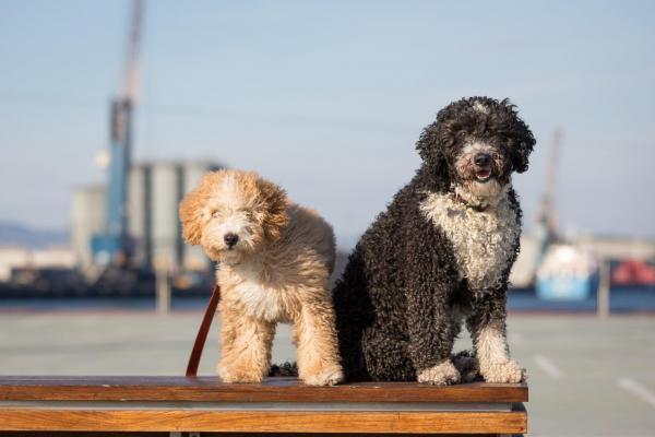 10 races de chiens d'eau