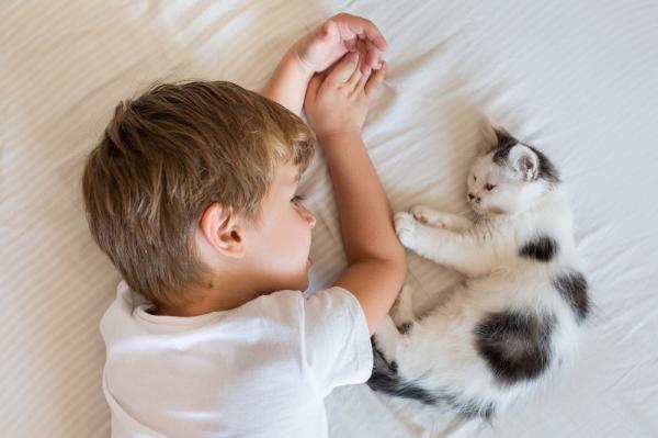 10 signes que votre chat vous aime