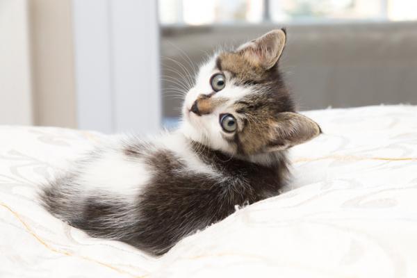 +100 NOMS pour chats et chatons AVEC SIGNIFICATION