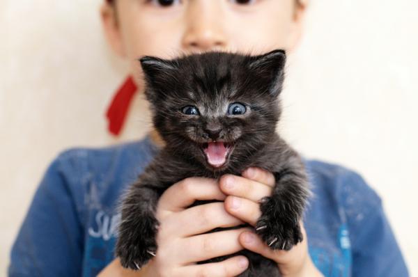 11 sons de chats et leur signification