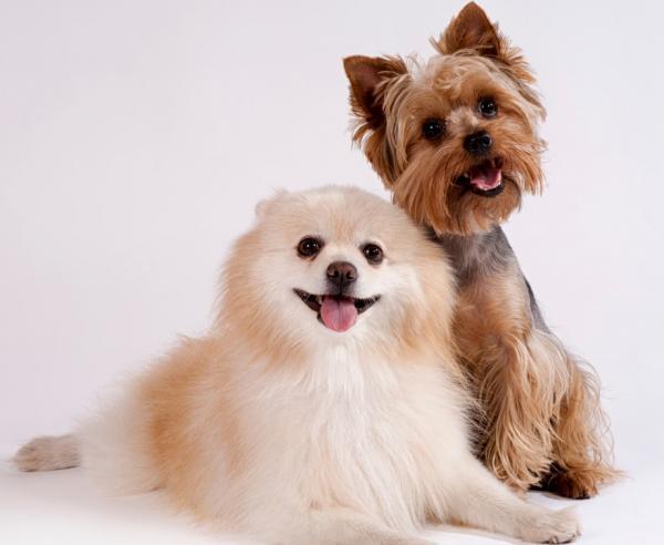+140 NOMS pour les petits chiens en anglais