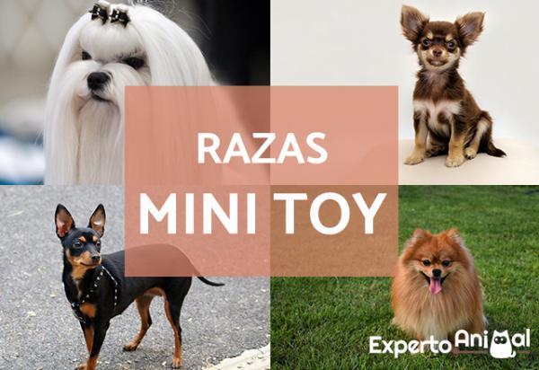 +15 Mini races de chien jouet