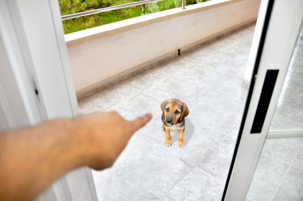 15 erreurs lors de la formation d'un chien