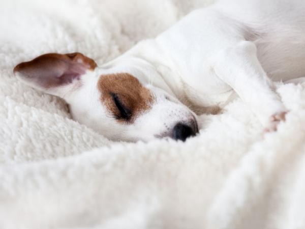 5 étapes pour détendre un chien très nerveux
