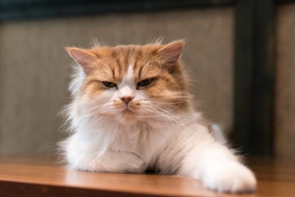 5 choses que les chats détestent les humains