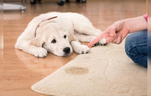 5 erreurs courantes lors de la réprimande d'un chien