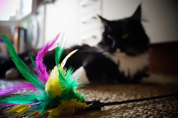 5 jouets pour chats faits maison