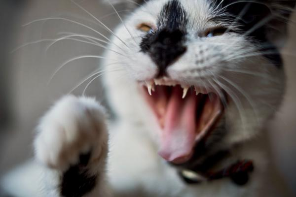5 signes que votre chat vous déteste