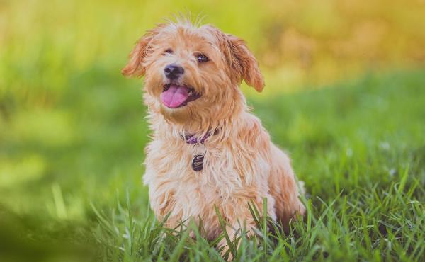 5 signes que votre chien est heureux