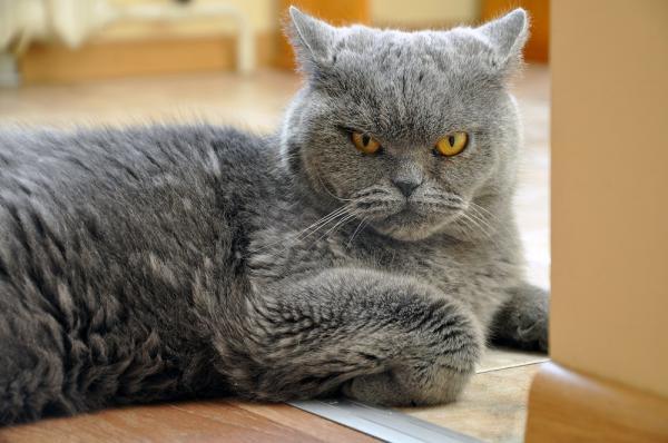 5 symptômes de stress chez le chat