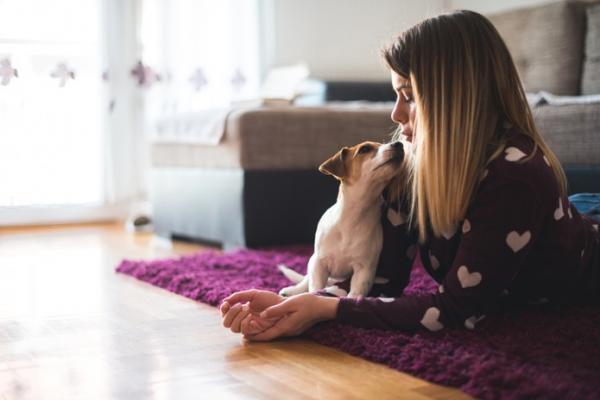 6 jeux à jouer avec votre chien à la maison
