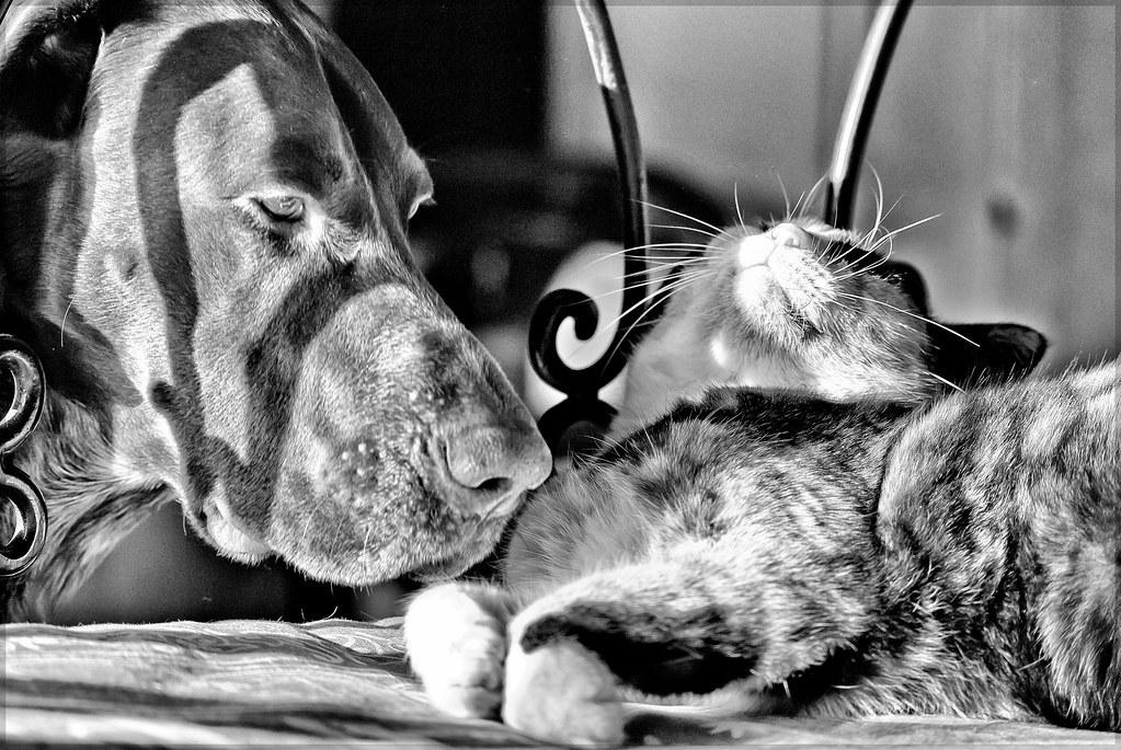 Comment préparer un chien à l'apparition d'un chat?