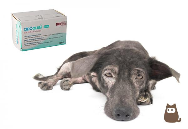 APOQUEL pour chiens - Dosage, composition et utilisations