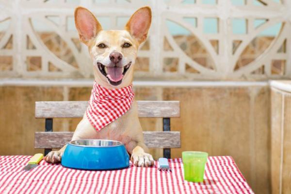 Aliments biologiques pour chiens - Types de régimes et avantages