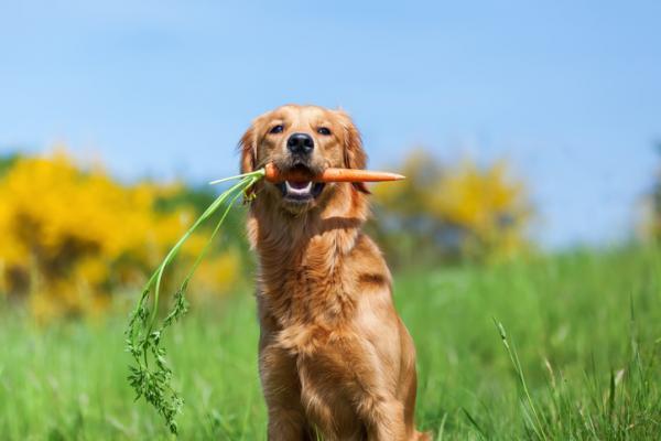 Améliorez l'haleine du chien avec des astuces maison