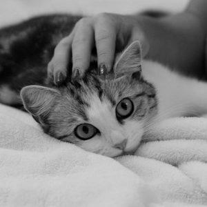 Anti-inflammatoire naturel pour chats