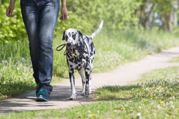 Apprenez à mon chien à marcher sans laisse pas à pas