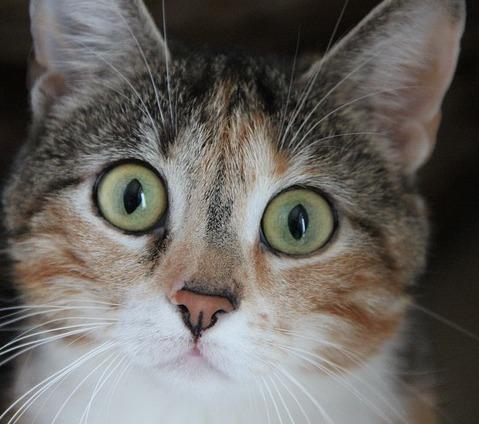 Blessures de chat - Premiers soins