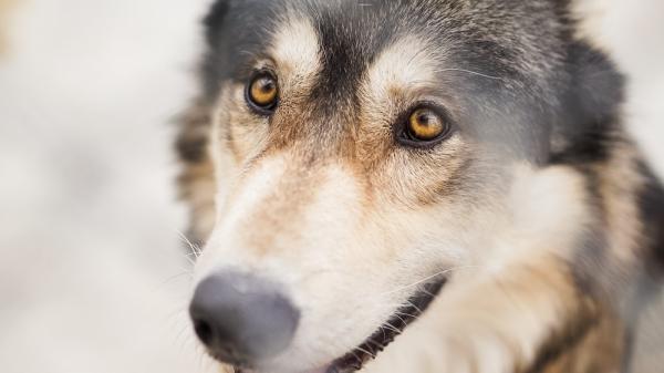 COMMENT VOIENT LES CHIENS? - Tout sur la vue des chiens!