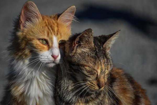 Cancer chez les chats - types, symptômes et traitement