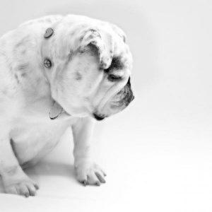 Cancer chez les chiens