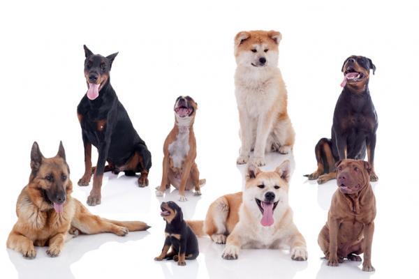 Classification des races de chiens FCI