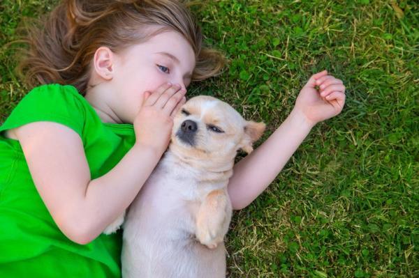 Combien de mots les chiens comprennent-ils?