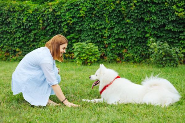 Commandes de base pour chiens - 5 exercices ÉTAPE PAR ÉTAPE + VIDÉO