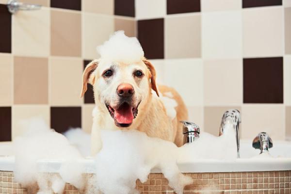 Comment baigner un chien par peur de l'eau?