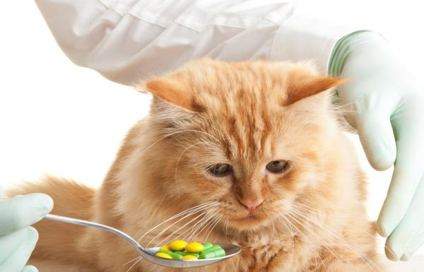 Comment donner des médicaments à un chat?