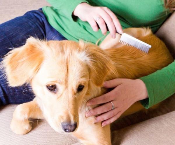 Comment empêcher mon chien de perdre beaucoup de cheveux?