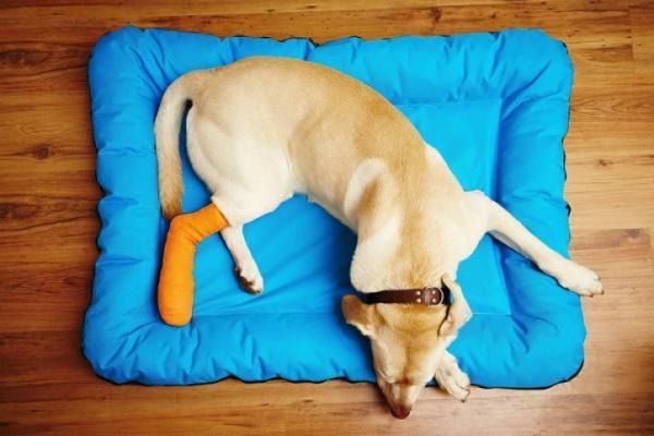 Comment empêcher mon chien de se gratter une plaie?