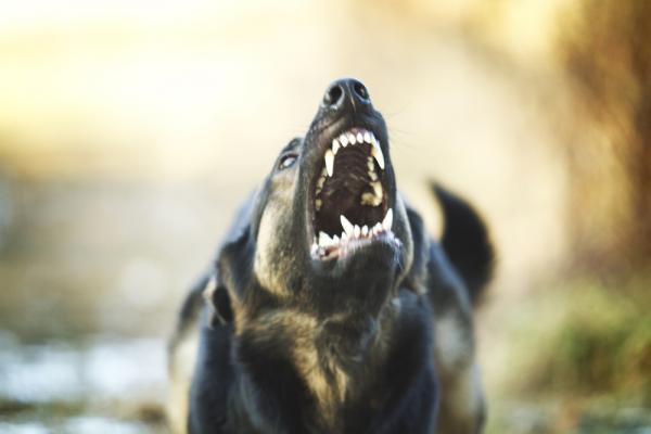 Comment empêcher un chien de vous mordre?