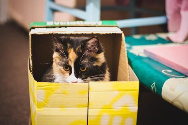 Comment fabriquer des jouets pour chats en carton?