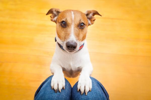 Comment faire attention à mon chien?