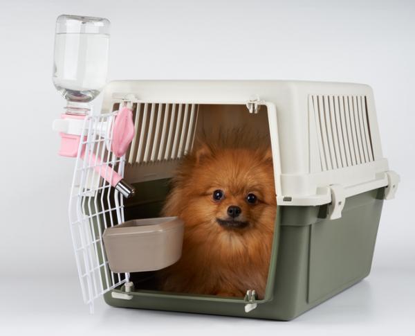 Comment habituer un chien au porteur?