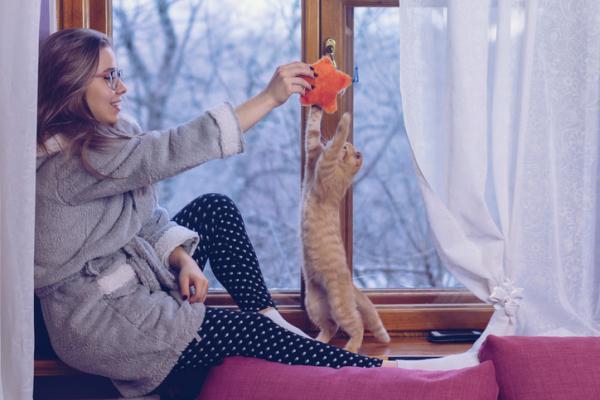 Comment jouer avec un chat?