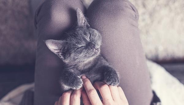 Comment masser un chat?