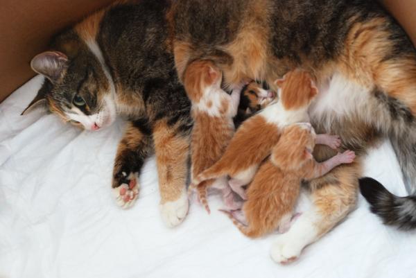 Comment naissent les chats? - TRAVAIL ET NAISSANCE AVEC VIDÉO!