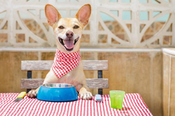 Comment préparer du foie de poulet pour chiens?