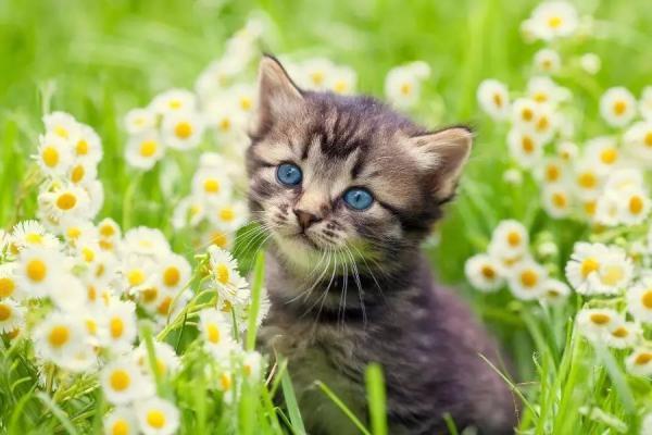 Comment prendre soin d'un chat en été?
