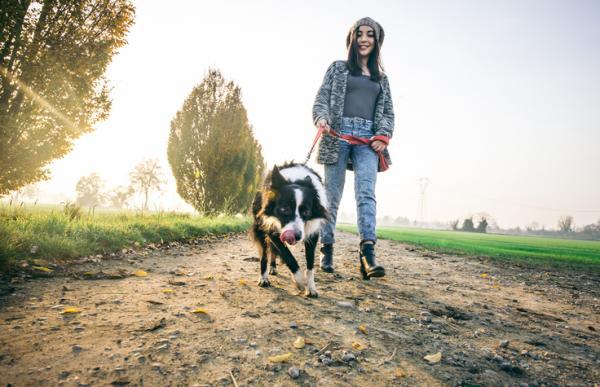 Comment promener correctement votre chien?