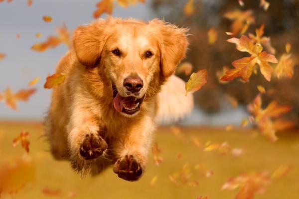 Comment rendre votre chien heureux?