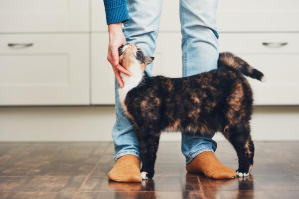 Comment savoir si mon chat a confiance en moi?