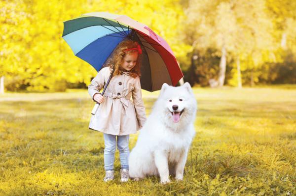 Conseils pour promener le chien sous la pluie
