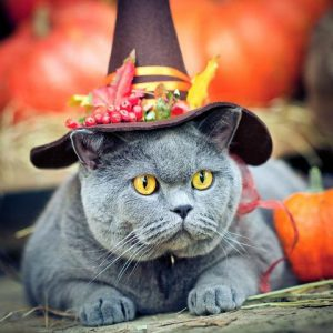 Costumes d'Halloween pour chats
